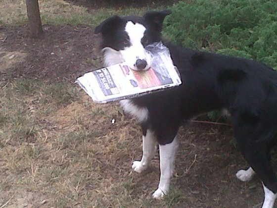 Eddie getting the newspaper