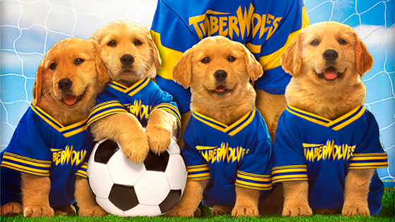The dogs from Air Bud