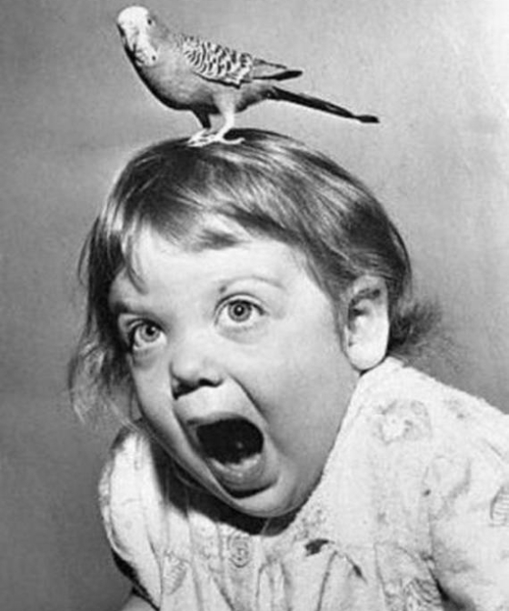 Crazy-bird-and-baby
